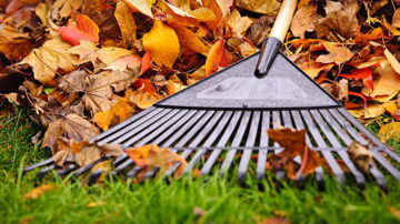 Fall & Winter Cleanup